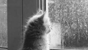梅雨になぜむくみを感じるの?