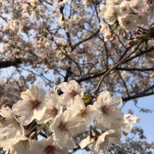 春のなんとな~くだるい感じは・・・