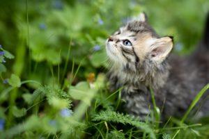 猫に精油(アロマ)は注意して!