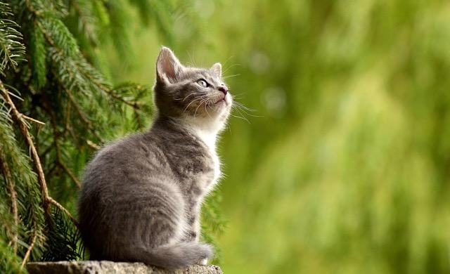注意!猫はアロマが危険!